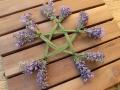 Lavendel_Stern10