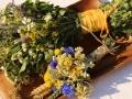 Wiesenblumen14