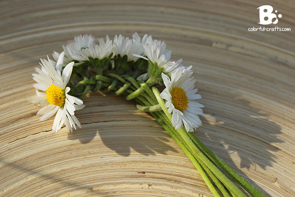 Daisy_Crown_10