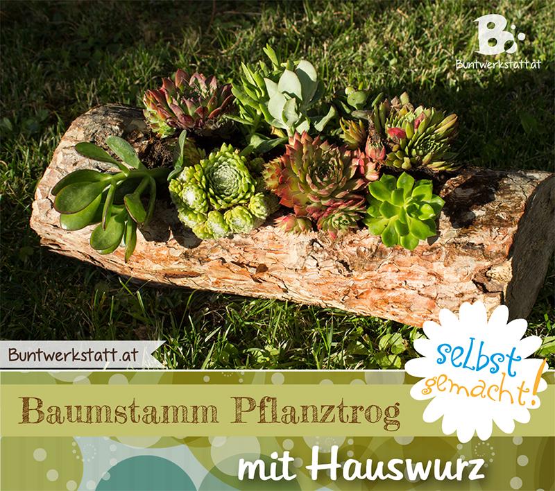 Gartentipp: Baumstamm Pflanztrog mit Hauswurz
